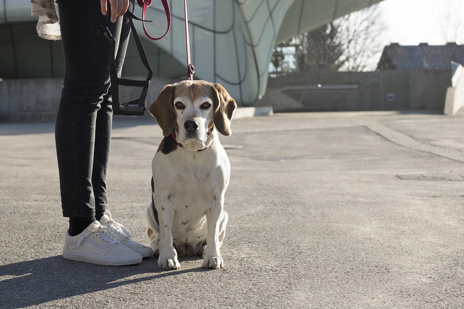 Hund1_FotoMüller.jpg
