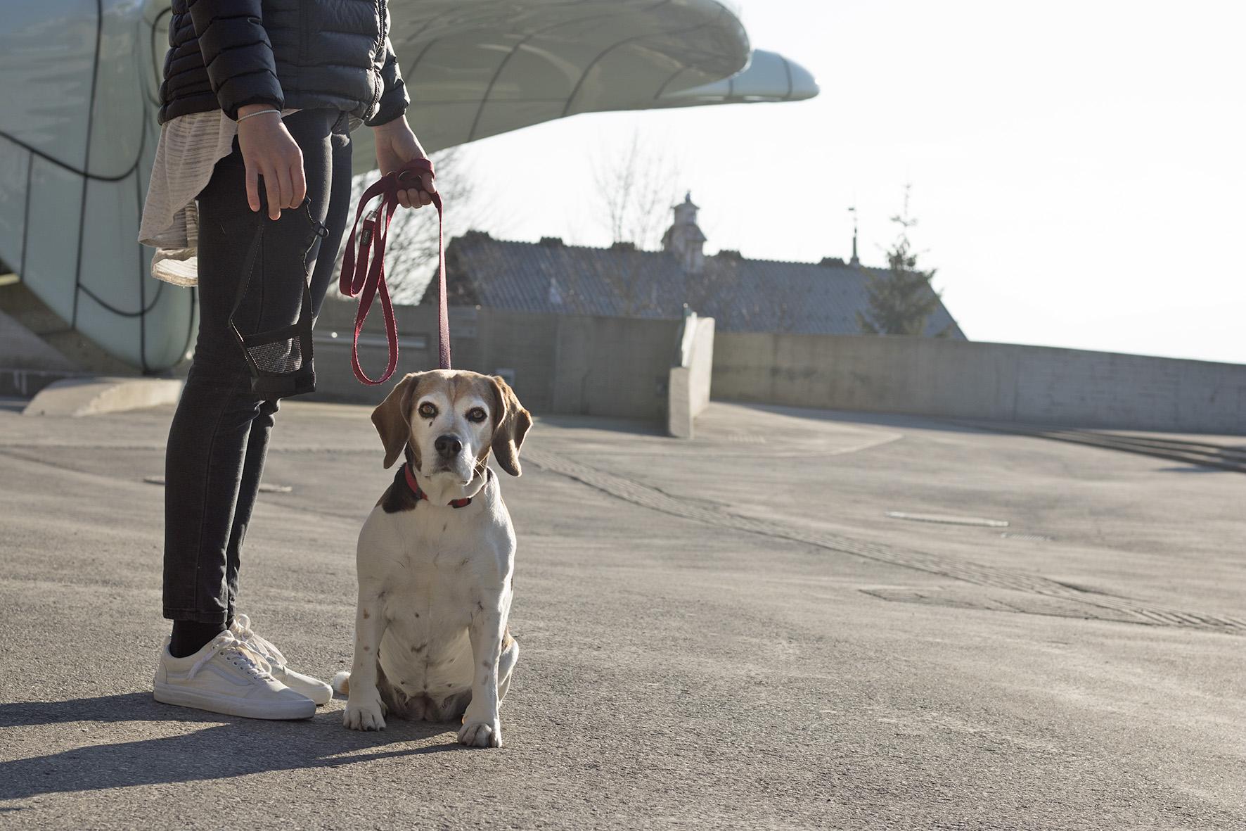 Hund2_FotoMüller.jpg
